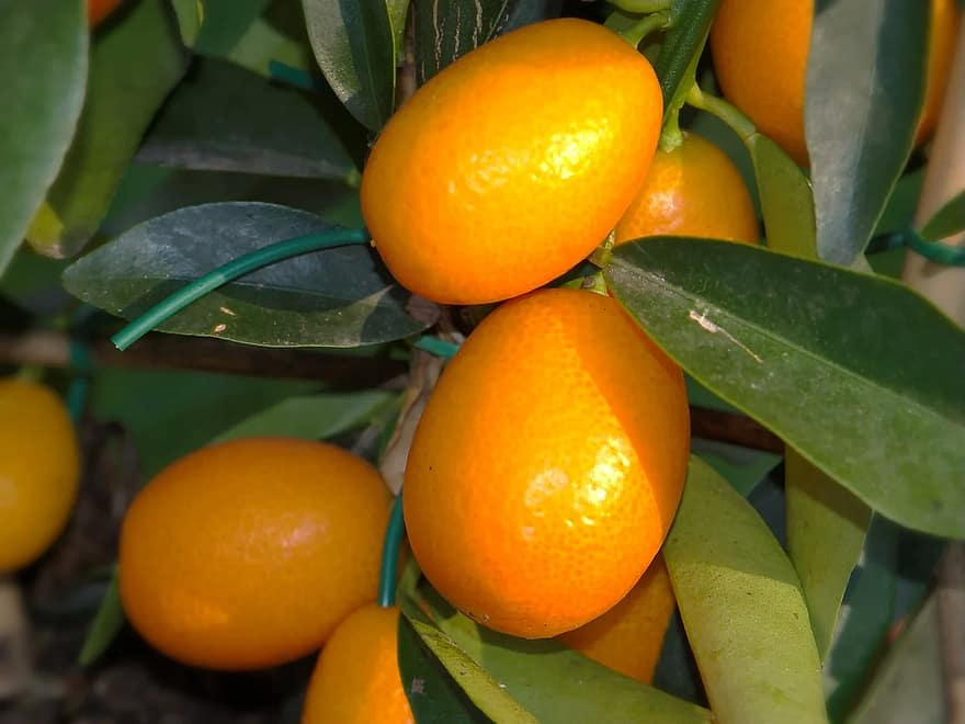 Κούμκουάτ Kumkquat mykerkyra.com