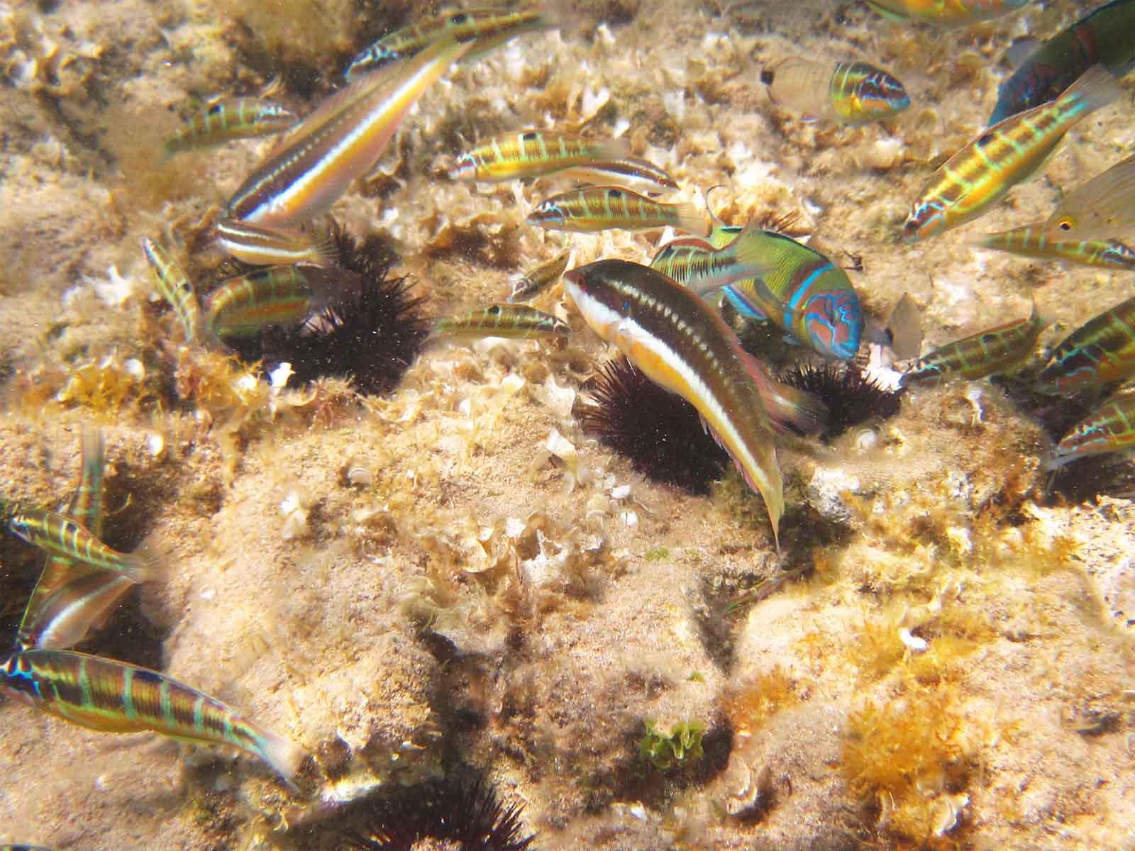 Ενημερωθείτε για την Θαλάσσια ζωή της Κέρκυρας στο mykerkyra.com