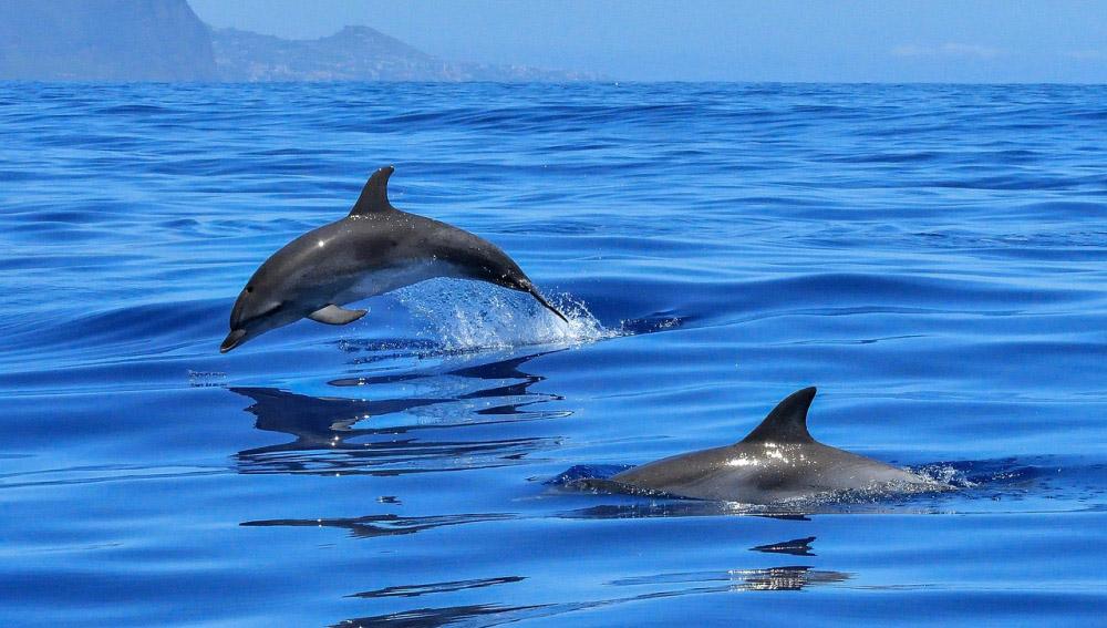 δελφίνια mykerkyra.com